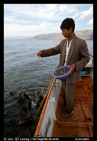Cormorant fisherman feeds small fish to his birds as a prize for catching large fish. Dali, Yunnan, China