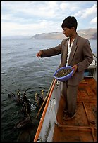 Cormorant fisherman feeds small fish to his birds as a prize for catching large fish. Dali, Yunnan, China (color)