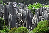 Trees and grey limestone pillars of the Stone Forest, split by rainwater. Shilin, Yunnan, China (color)