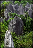 Trees and grey limestone pillars of the Stone Forest, eroded into fanciful forms. Shilin, Yunnan, China