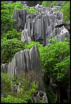Details of maze of grey limestone pinnacles of the Stone Forst. Shilin, Yunnan, China (color)