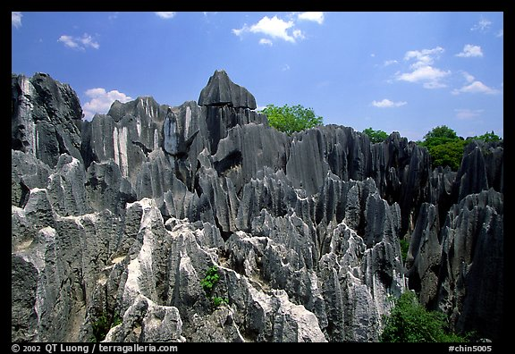 Details of the grey limestone pinnacles of the Stone Forst. Shilin, Yunnan, China