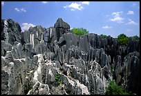 Details of the grey limestone pinnacles of the Stone Forst. Shilin, Yunnan, China (color)