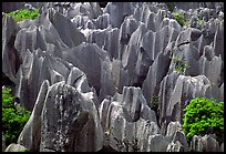 Grey limestone pillars of the Stone Forest. Shilin, Yunnan, China