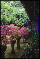 Courtyard of the Wufeng Lou (Five Phoenix Hall) with spring blossoms. Lijiang, Yunnan, China (color)