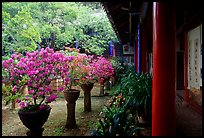 Courtyard of the Wufeng Lou (Five Phoenix Hall) with spring blossoms. Lijiang, Yunnan, China