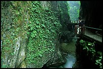 Narrow Gorge between Qingyin and Hongchunping. Emei Shan, Sichuan, China ( color)