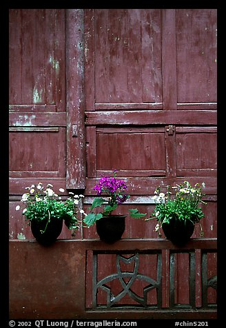Potted flowers and wooden wall in Bailongdong temple. Emei Shan, Sichuan, China