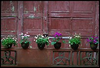 Potted flowers and wooden wall in Bailongdong temple. Emei Shan, Sichuan, China (color)