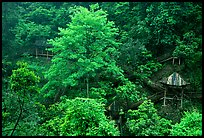 Path and pavillon on steep hillside between Qingyin and Hongchunping. Emei Shan, Sichuan, China (color)