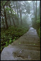 The staircase above Hongchunping. Emei Shan, Sichuan, China