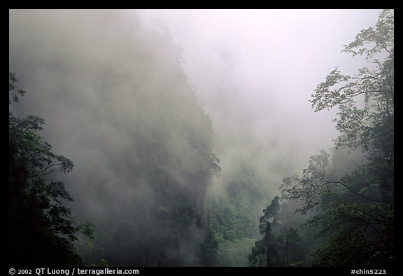 Cliffs and trees in mist between Hongchunping and Xiangfeng. Emei Shan, Sichuan, China (color)