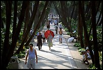 Walking to work and for exercie in a tree-lined alley of Liuha Park. Guangzhou, Guangdong, China (color)