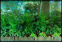 Plants and forest mural photograph, Taoyuan Airport. Taiwan (color)