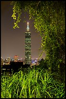 Taipei 101 seen through vegetation at night. Taipei, Taiwan (color)