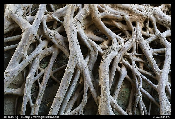 Roots on ground of Guandu Temple. Taipei, Taiwan (color)