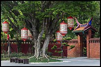 Lanterns hanging from tree, Confuscius Temple. Taipei, Taiwan ( color)