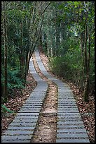 Paved path in forest. Sun Moon Lake, Taiwan (color)