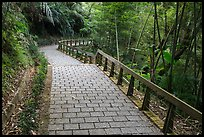 Path on Shabalan Mountain. Sun Moon Lake, Taiwan (color)