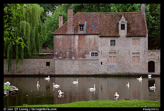 Swans, begijnhuisje, and canal. Bruges, Belgium (color)