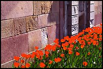 Tulips and wall, royal residence of Drottningholm. Sweden ( color)