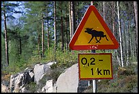 Moose crossing sign. Central Sweden ( color)