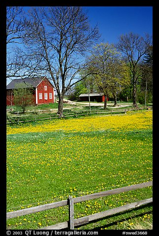 Pasture and farm. Gotaland, Sweden (color)