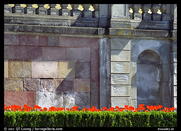 Tulips and wall, parks of royal residence of Drottningholm. Sweden (color)