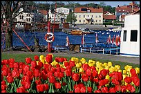 River and tulips, Vastervik. Gotaland, Sweden ( color)
