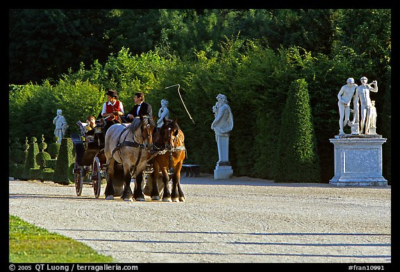 Horse carriage in an alley of the Versailles palace gardens. France