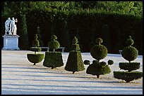 Hedged trees, Versailles palace gardens. France