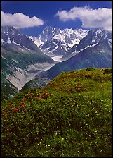 Meadow with wildflowers with Grandes Jorasses in the background, Chamonix. France (color)