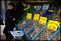 Stand with a variety of oysters in Cancale. Brittany, France ( color)