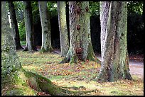 Trees in Palace Gardens, Fontainebleau Chateau. France ( color)