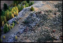 Herd of sheep on mountainside. Maritime Alps, France (color)