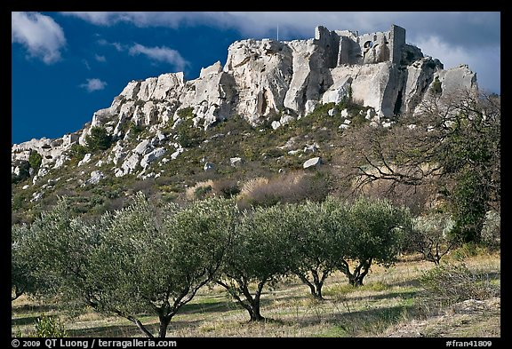 Olive trees and clifftop village, Les Baux-de-Provence. Provence, France