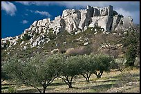 Olive trees and clifftop village, Les Baux-de-Provence. Provence, France (color)