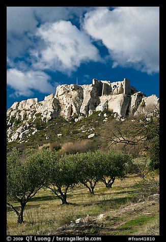 Olive orchard and village perched on cliff, Les Baux-de-Provence. Provence, France