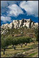 Olive orchard and village perched on cliff, Les Baux-de-Provence. Provence, France ( color)
