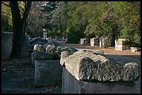 Burial grounds, Alyscamps necropolis. Arles, Provence, France (color)