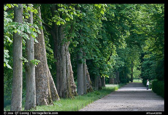 Forested alley, Fontainebleau Palace. France
