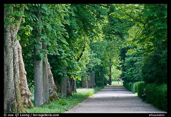 Chestnut trees, alley in English Garden, Palace of Fontainebleau. France (color)