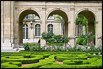 Hedges and roses in courtyard of hotel particulier. Paris, France