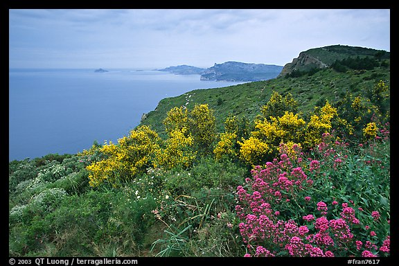 Wildflowers and Mediterranean seen from Route des Cretes. Marseille, France (color)