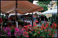 Flower Market, Nice. Maritime Alps, France (color)