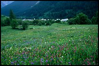 Meadow with wildflowers and village near Lautaret Pass. France