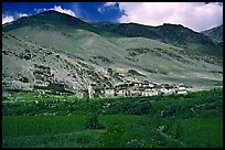 Field of barley grasses, village, and hills, Zanskar, Jammu and Kashmir. India