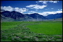 Wildflowers and cultivated fields in the Padum plain, Zanskar, Jammu and Kashmir. India