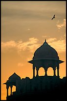 Bird and wall pavilions of Red fort, sunrise. New Delhi, India
