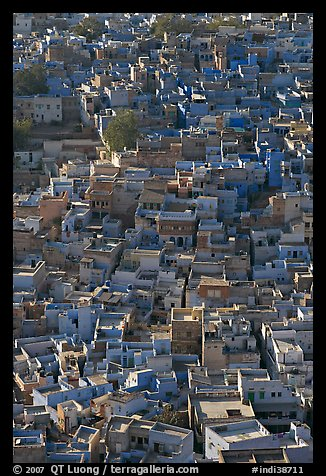 Rooftops of blue houses, seen from above. Jodhpur, Rajasthan, India